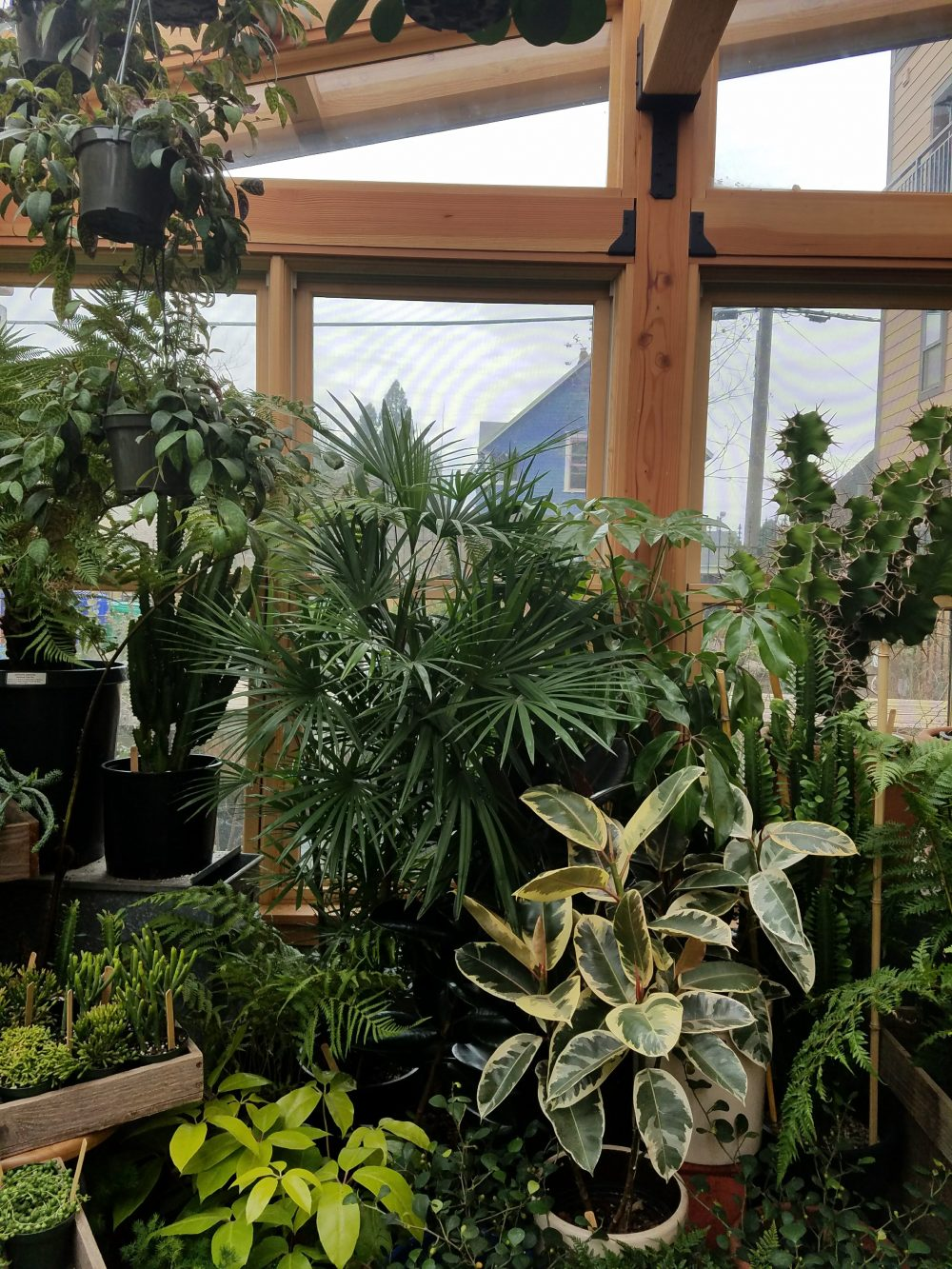 Make your house a home with plants aka my favorite portland nurseries living room realty for Living room realty portland or