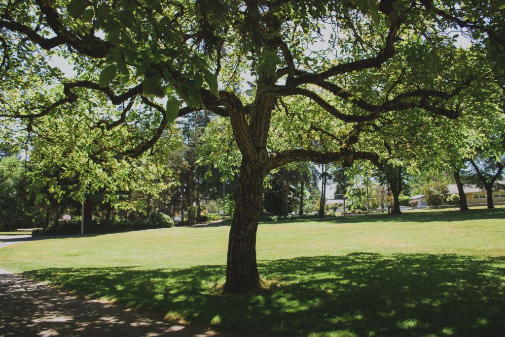 Portland's Historic Woodlawn District Woodlawn Park