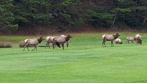 Manzanita Links Golf Course
