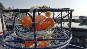 crab derby at Kelly's Brighton Marina